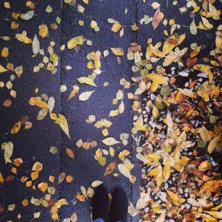 Cum sa ramai indiferent la asa frumusete de culori? 💛🧡💛  #toamnainbucuresti #dozadebine #culoridetoamna #lucrurisimple #edebine  #octombrie #autumnvibes🍁 #autumnmood #autumncolors #october #autumnleaves #mothernature #naturelovers #findbeautyineverything